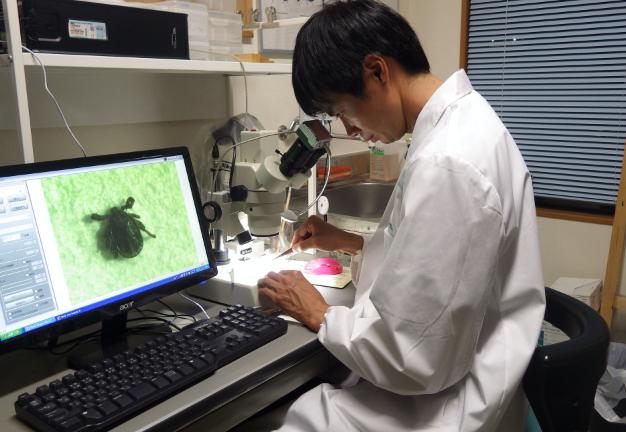 パソコンで有害生物を分析する写真