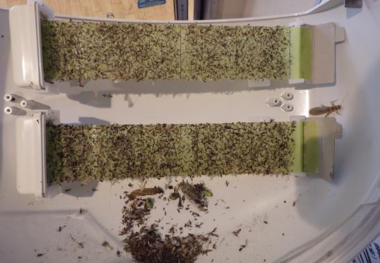 設置された捕虫器に虫がたくさん取れている